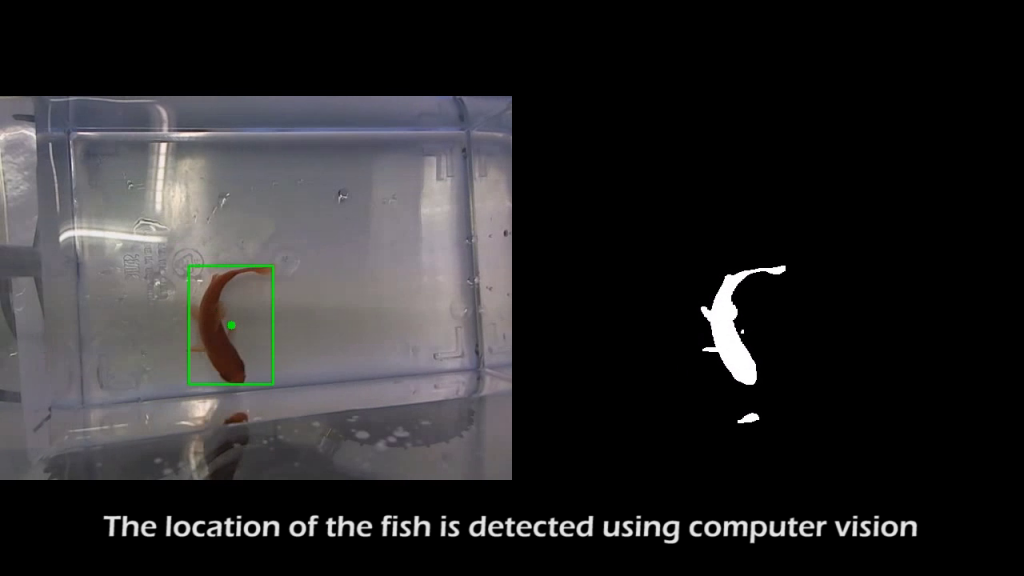 Fish on Wheels computer vision