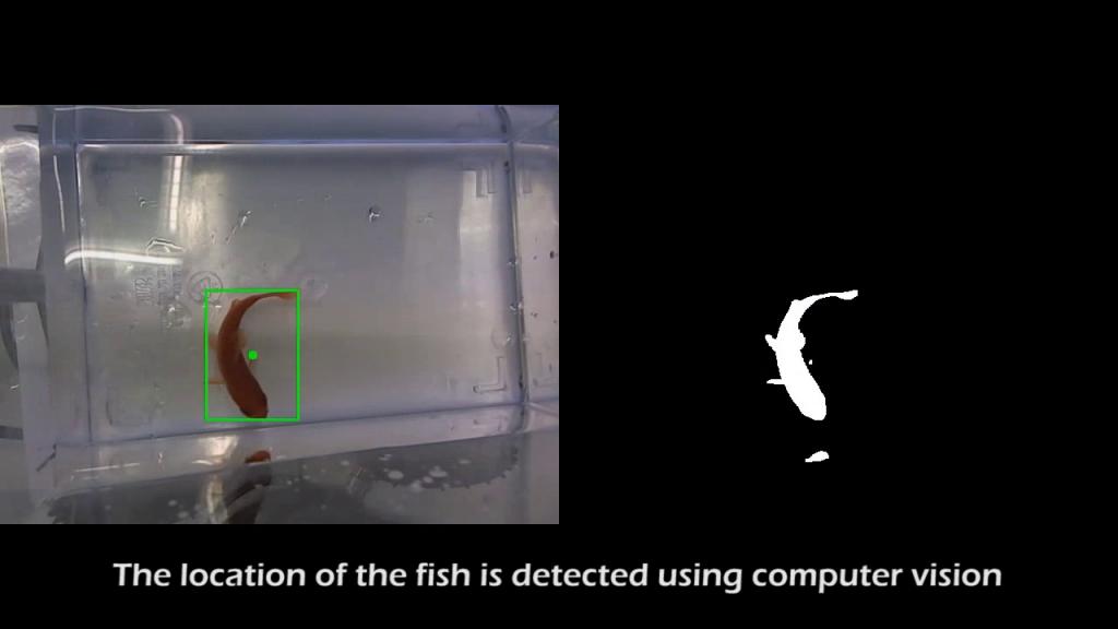 Fish on Wheels computer vision